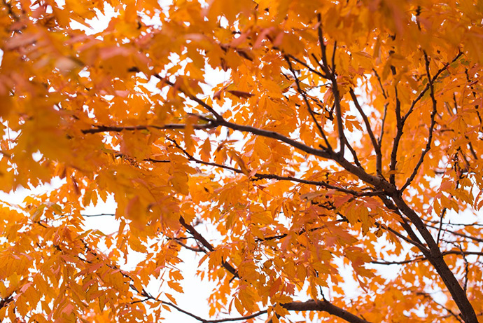 gabriel-foto-herfst